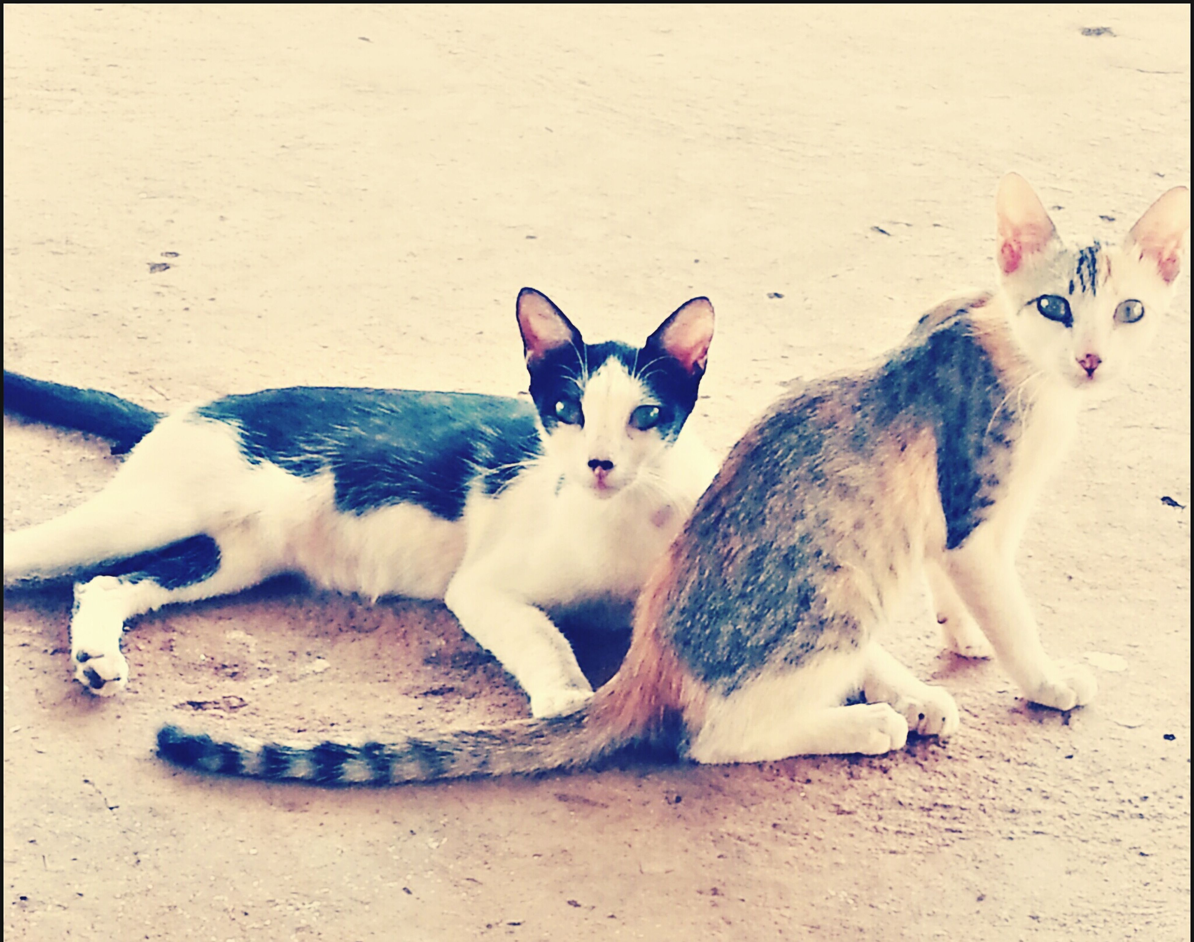 domestic animals, animal themes, pets, mammal, one animal, dog, auto post production filter, portrait, looking at camera, two animals, high angle view, lying down, relaxation, transfer print, domestic cat, sand, no people, zoology, day, cat
