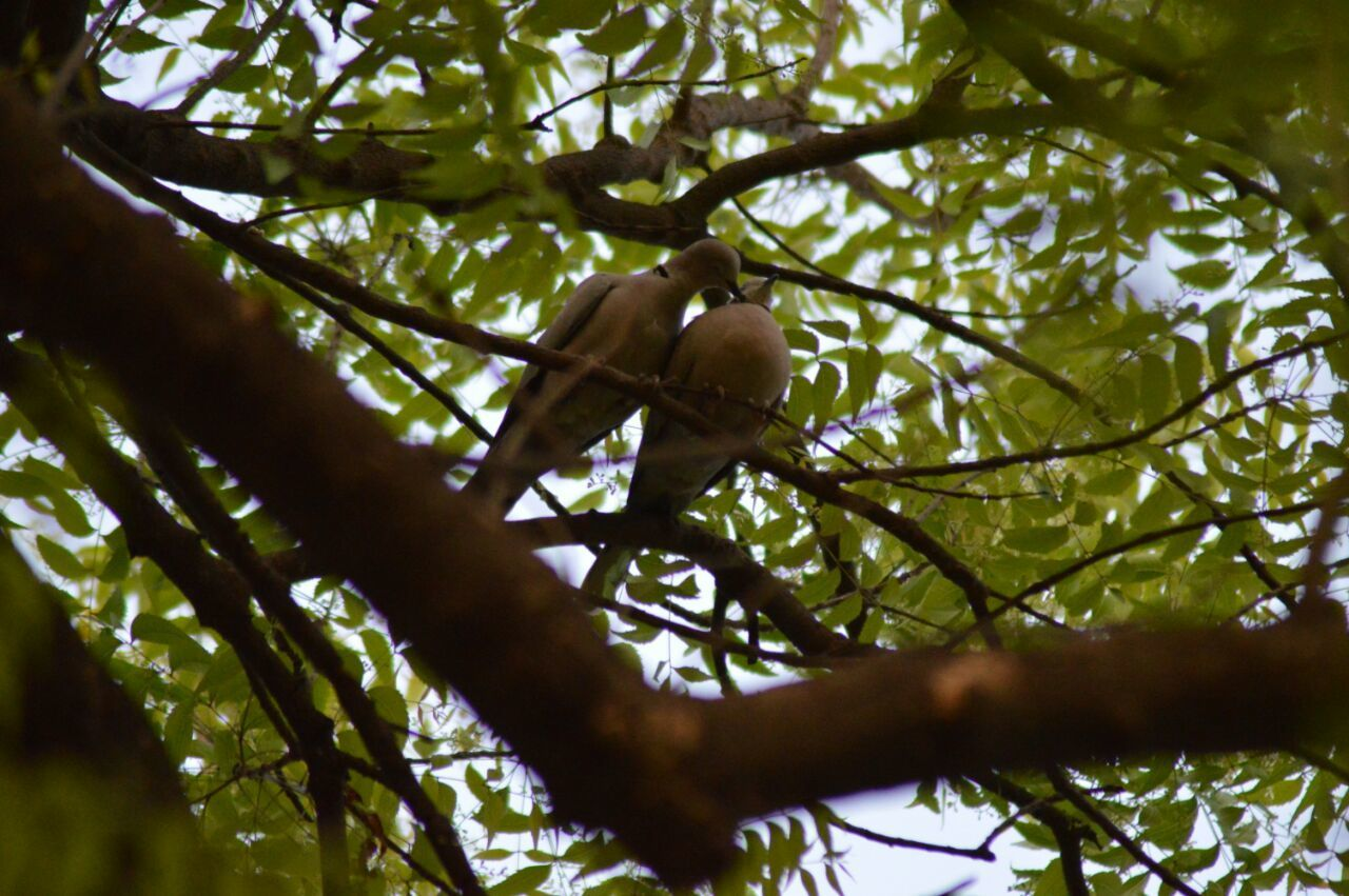 tree, low angle view, branch, animals in the wild, animal themes, nature, outdoors, animal wildlife, one animal, day, no people, leaf, beauty in nature, perching, bird, mammal, sky