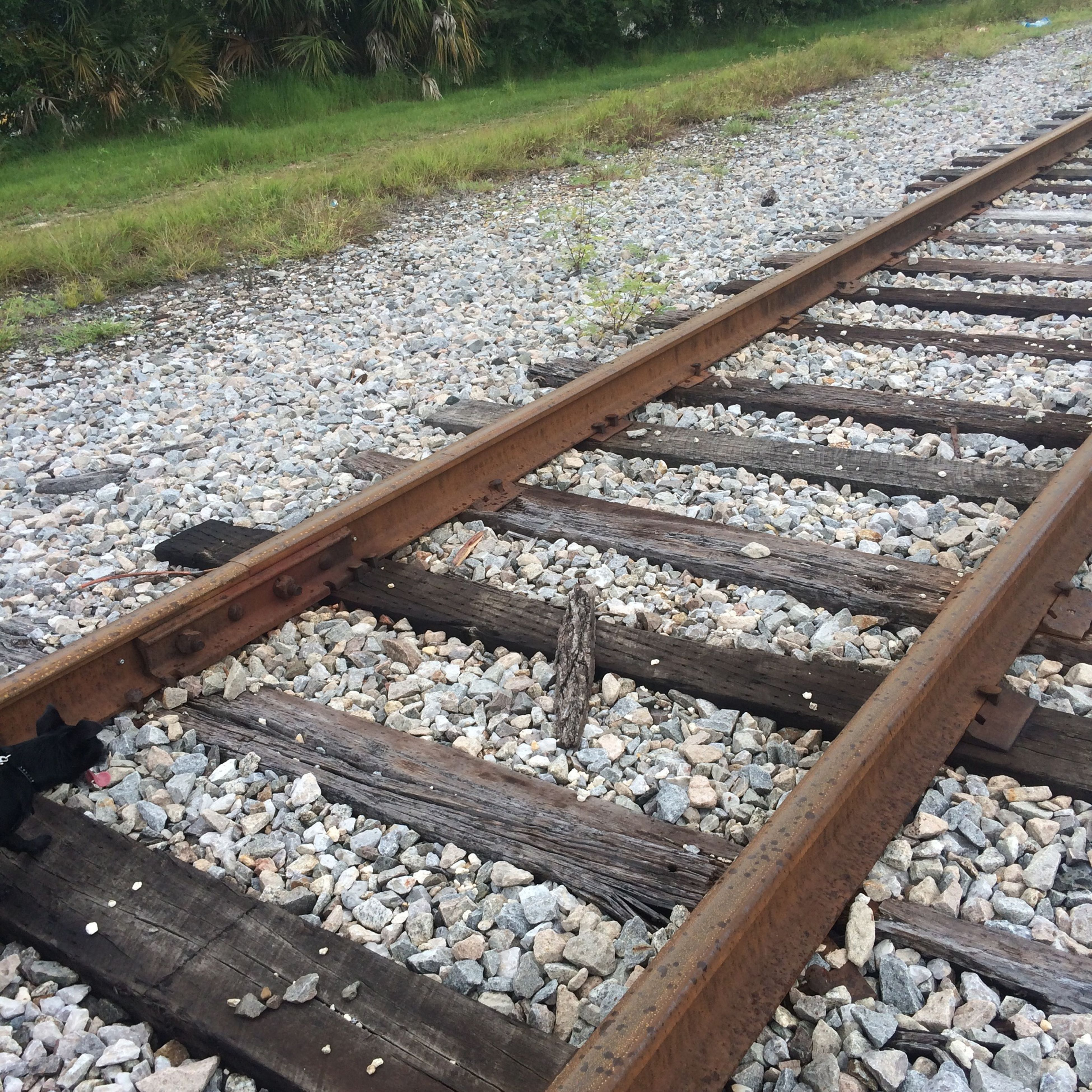 railroad track, rail transportation, high angle view, stone - object, metal, abundance, gravel, transportation, day, railway track, outdoors, large group of objects, no people, nature, diminishing perspective, rock - object, field, public transportation, wood - material, railing