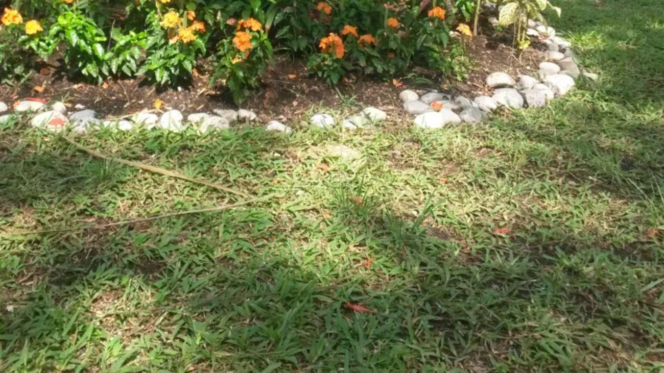 A Garden :3. Flowers Life Grass Rocks Photography Goodsaturday ^^ c: