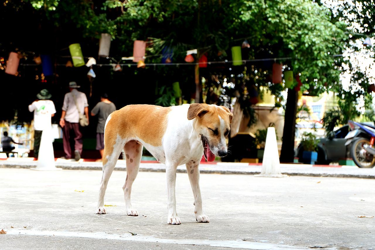 Hello World Taking Photos Cheese! Steetphotography Doglife Stray Dog Morning Walk Enjoying Life In Thailand All...day Good Luck For You💞💞💞 First Eyeem Photo Learn & Shoot: Working To A Brief