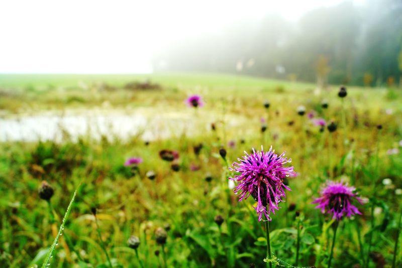Schöne Landschaft Beautiful Nature Nature Photography Landscape Landscape_Collection
