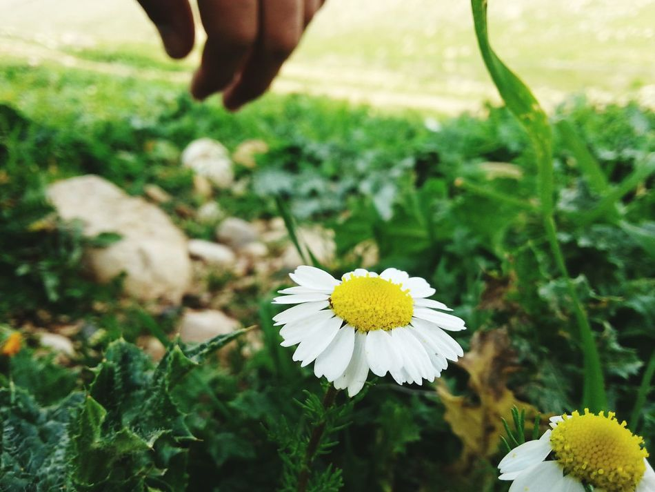 Flower Flowers Beautiful Kendi Kendicekimim