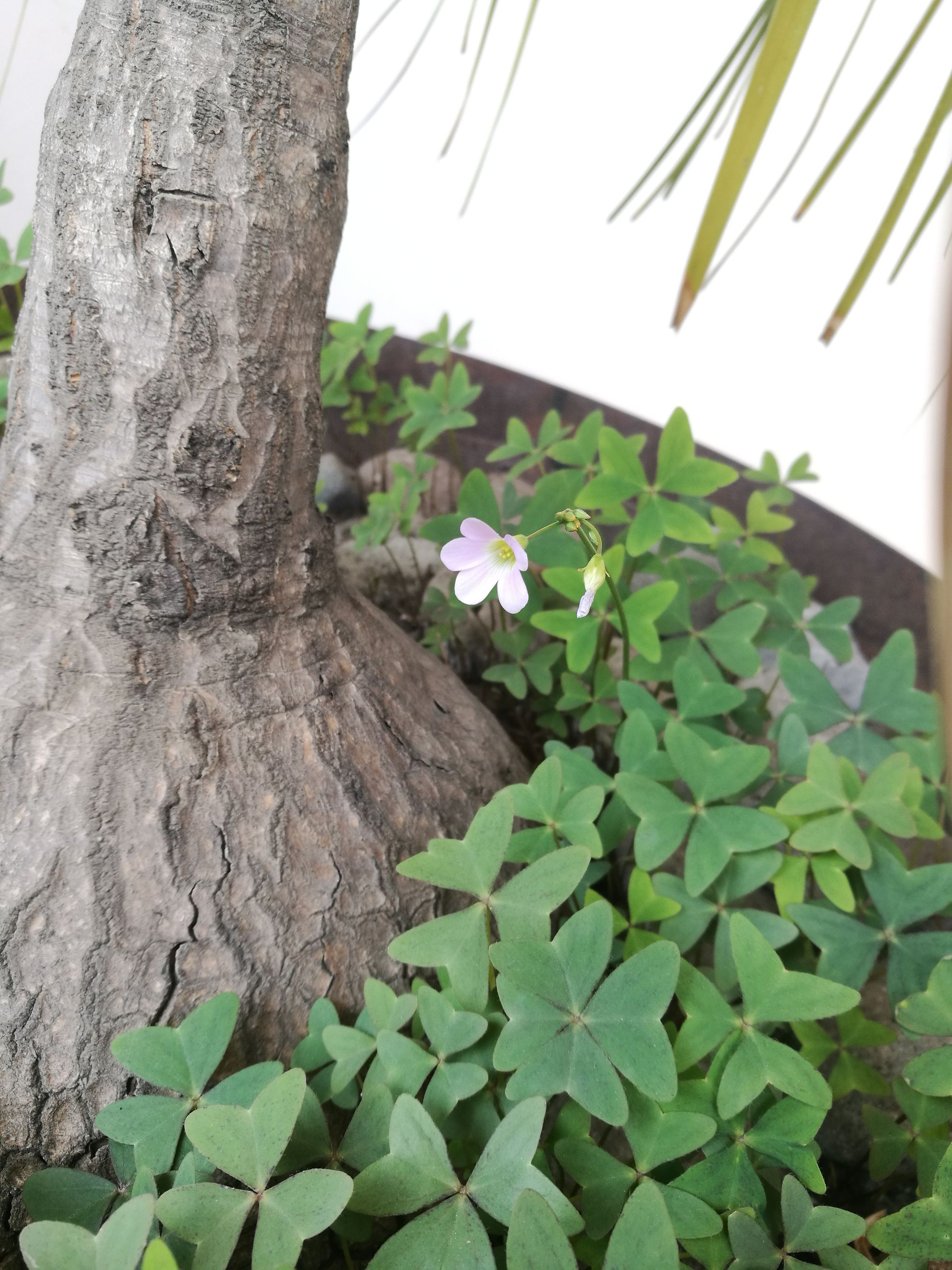 tree, growth, leaf, tree trunk, nature, plant, no people, day, green color, close-up, outdoors, beauty in nature, freshness, sky