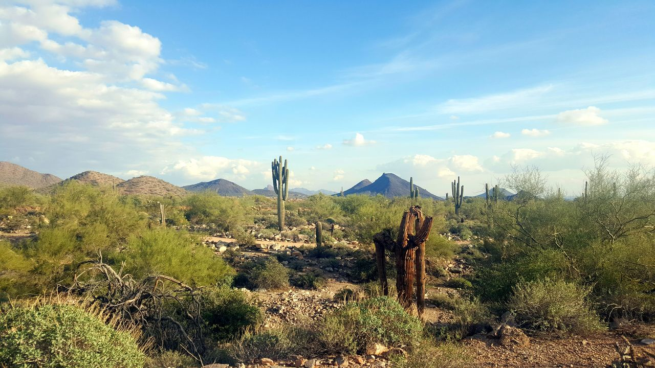 Growth Sky Nature Mountain Outdoors Landscape Tree Day Arizona Landscape Arizona Desert Arizona Sky Cactus Travel Arizona Plant Tranquil Scene Freshness Tranquility Green Color Agriculture Travel Destinations Beauty In Nature Scenics Sunlight Cloud - Sky