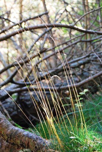 Mundo Fragil EyeEm Nature Lover Fragile