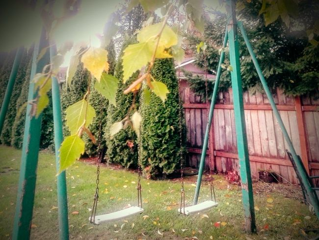 From Where I Stand ERA Swings Let's Swing Human Activity 1970ish Shades Of Green  Backyard Perspective