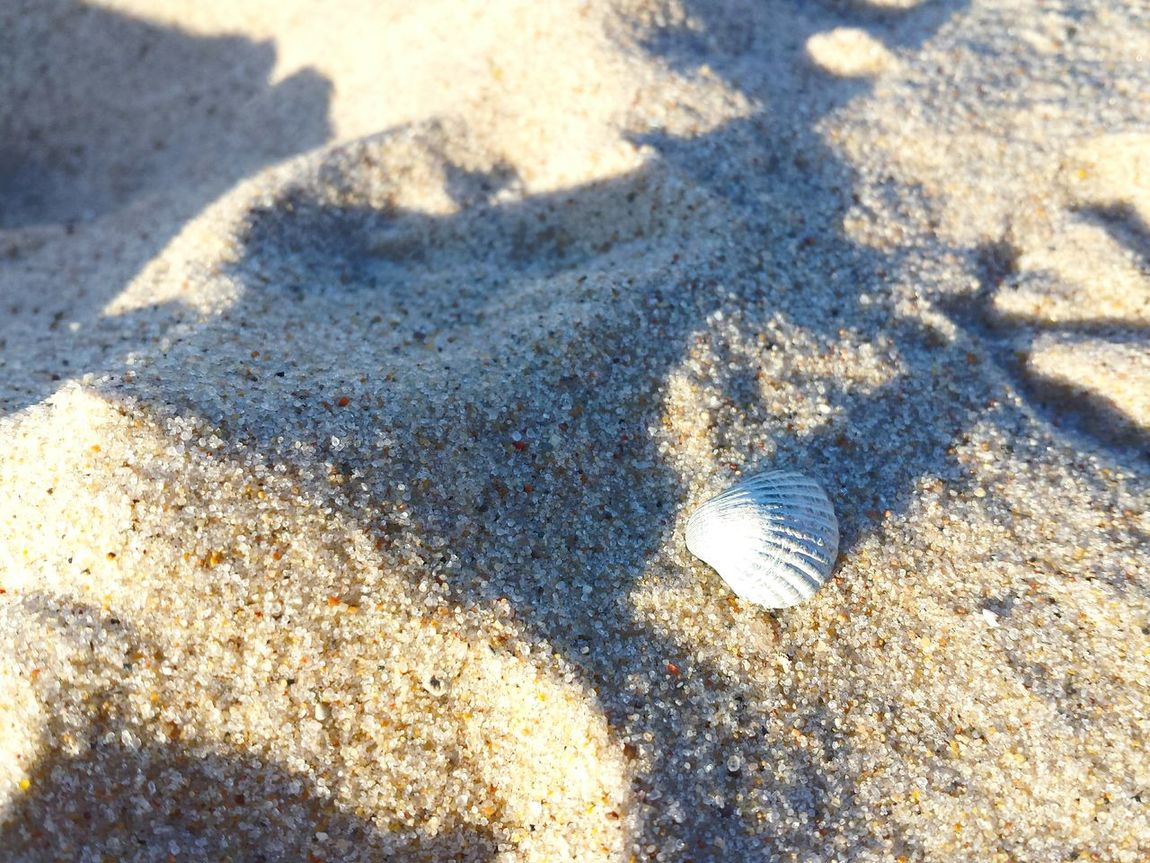 Mini Shell Beach Sand Shadow Sunlight Nature Day Shore Sunny Outdoors Full Frame Tranquility No People Coastline Overhead View Beauty In Nature Beach Time Beach Life Close-up Shell On Sand Still Life Stillleben Ladyphotographerofthemonth Sand Closeup Traveling Maximum Closeness Art Is Everywhere
