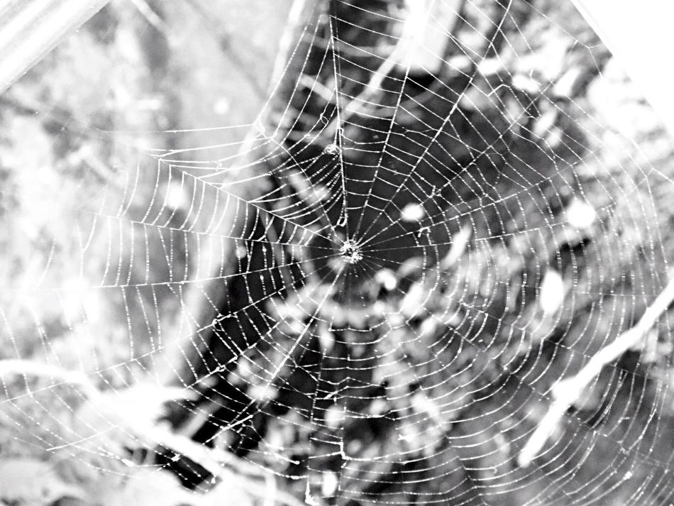 Spider Web Spider Web Focus On Foreground Nature Close-up No People Outdoors Fragility Day Trapped Animal Themes Eyem Vision