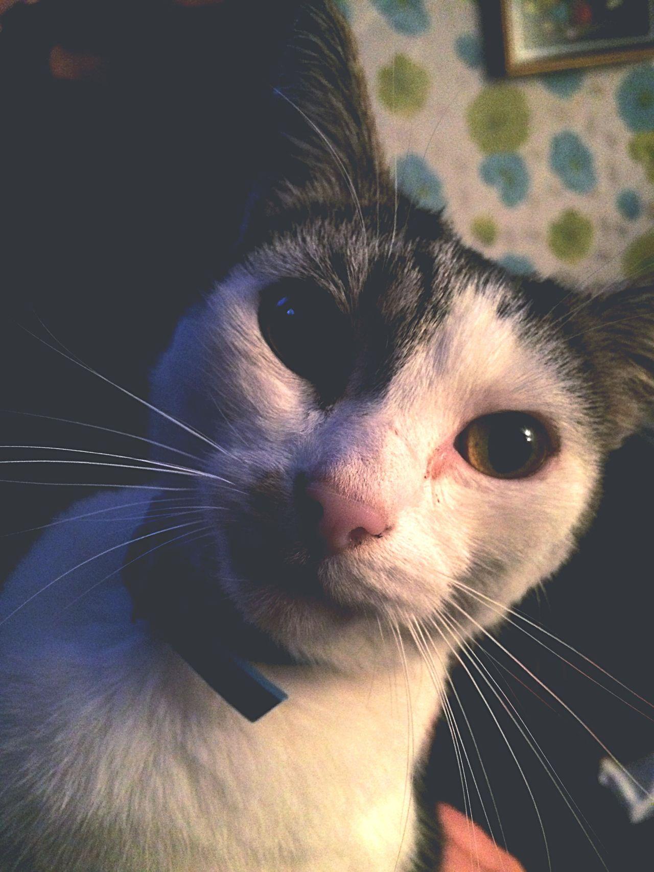 9/2/17 Cat Friend Feline Selfie✌ Pussycat Meow🐱 Meow Purrrrrrfect