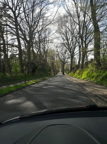 Bare Tree Beauty In Nature Car Car Interior Car Point Of View Dashboard Day Driving First Eyeem Photo Journey Land Vehicle Mode Of Transport Nature No People Outdoors Road Road Trip Scenics Sky The Way Forward Transportation Travel Tree Vehicle Interior Windshield