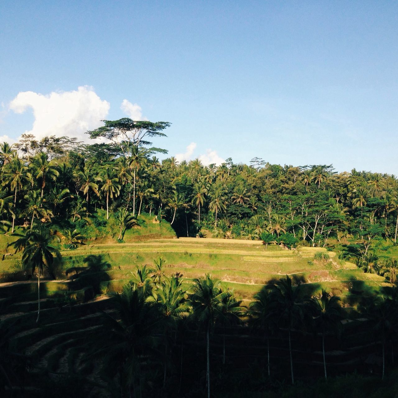High Angle View Of Palm Trees On Grassy Field Against Sky