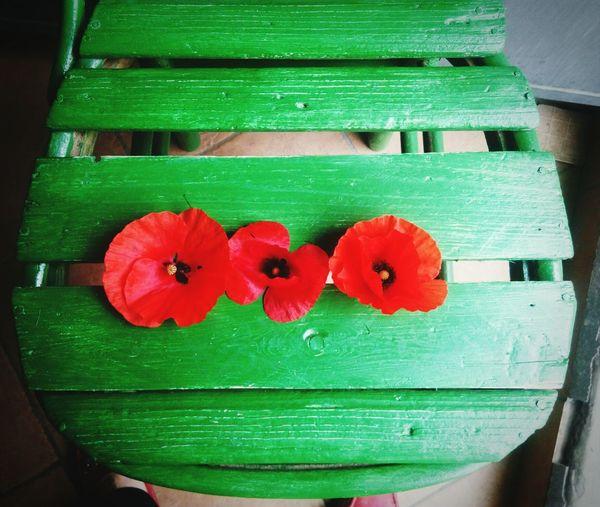 Redandgreen Flowers RedFlowers😍 Showcase April Taking Photos Hi! Hello World Three Is The Magic Number Take Photos Beauty In Nature Three