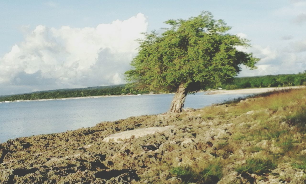 nature, water, beauty in nature, tranquil scene, tranquility, scenics, tree, no people, sky, day, landscape, outdoors, sea