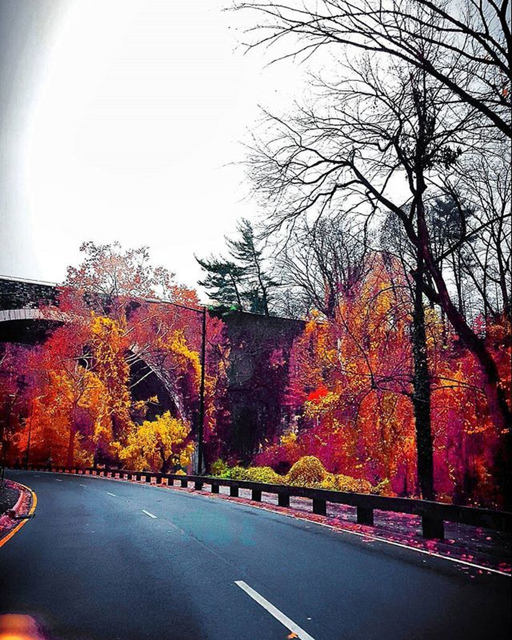 autumn, change, tree, leaf, road, the way forward, nature, day, tranquil scene, no people, beauty in nature, outdoors, scenics, tranquility, multi colored, growth, branch, architecture, sky, maple