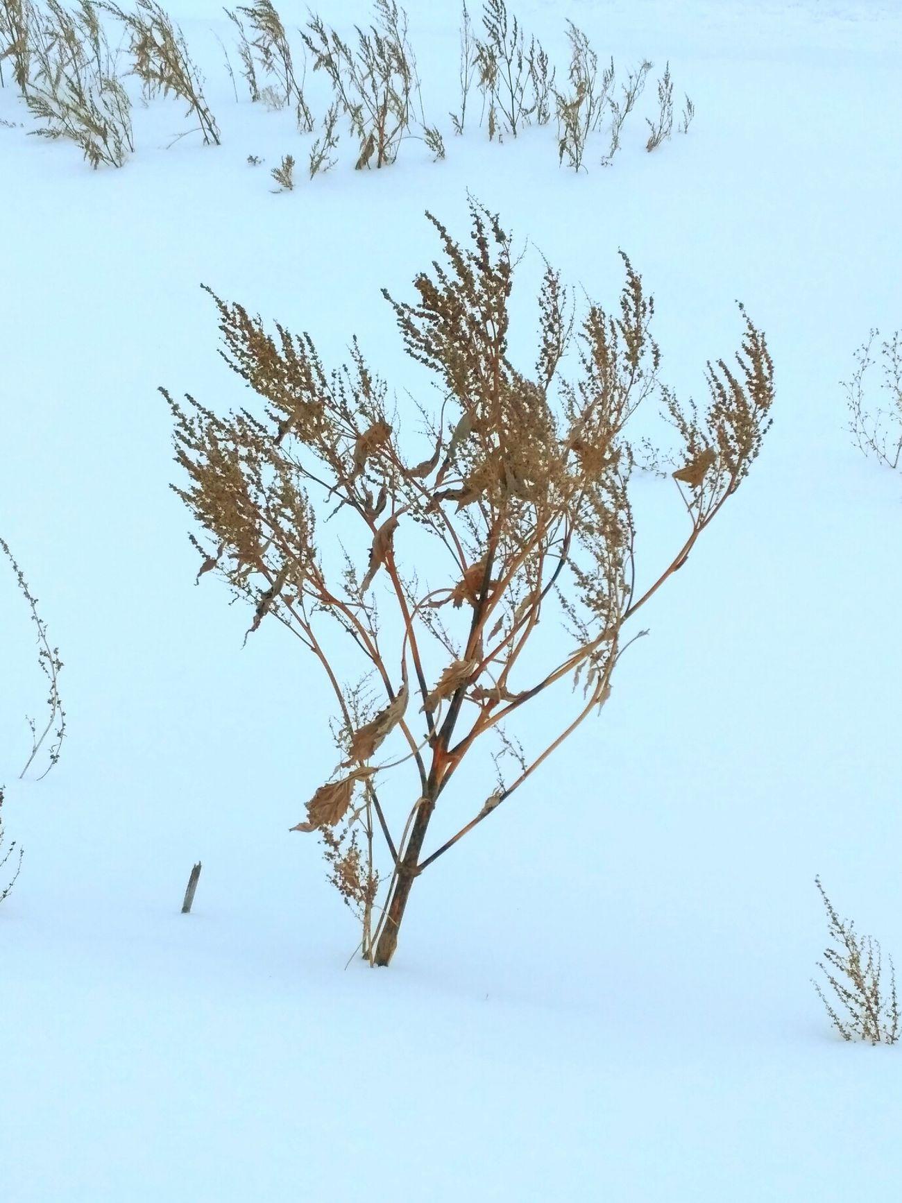 деревня Трава природа настроение солнце траваудома трава сухаятрава зима Cold Temperature зима❄️ Winter Nature зимапришла