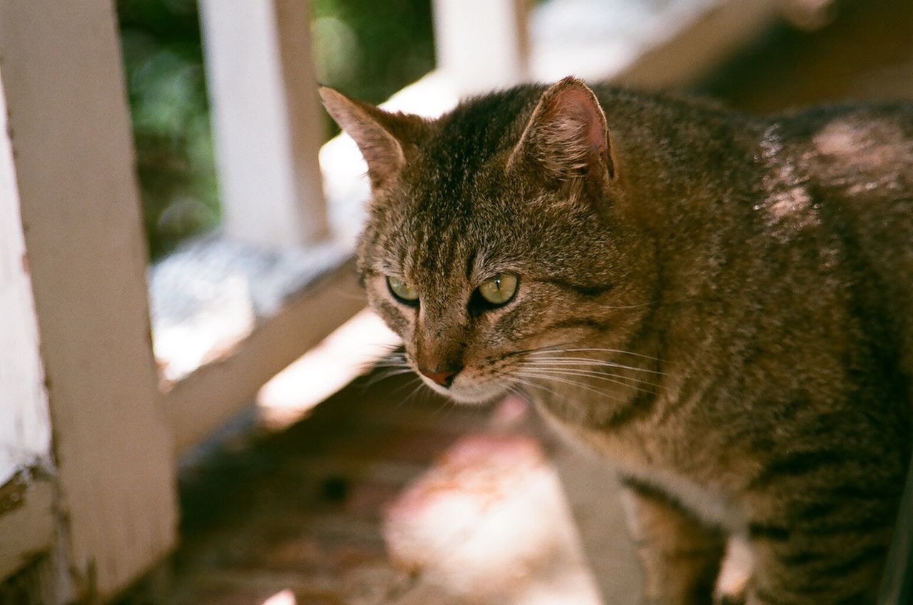 Animal Themes Cat Close-up Day Domestic Animals Domestic Cat EyeEm Nature Lover Feline Film Photography Filmisnotdead Focus On Foreground Indoors  Mammal Minolta No People One Animal Pets Portrait Whisker