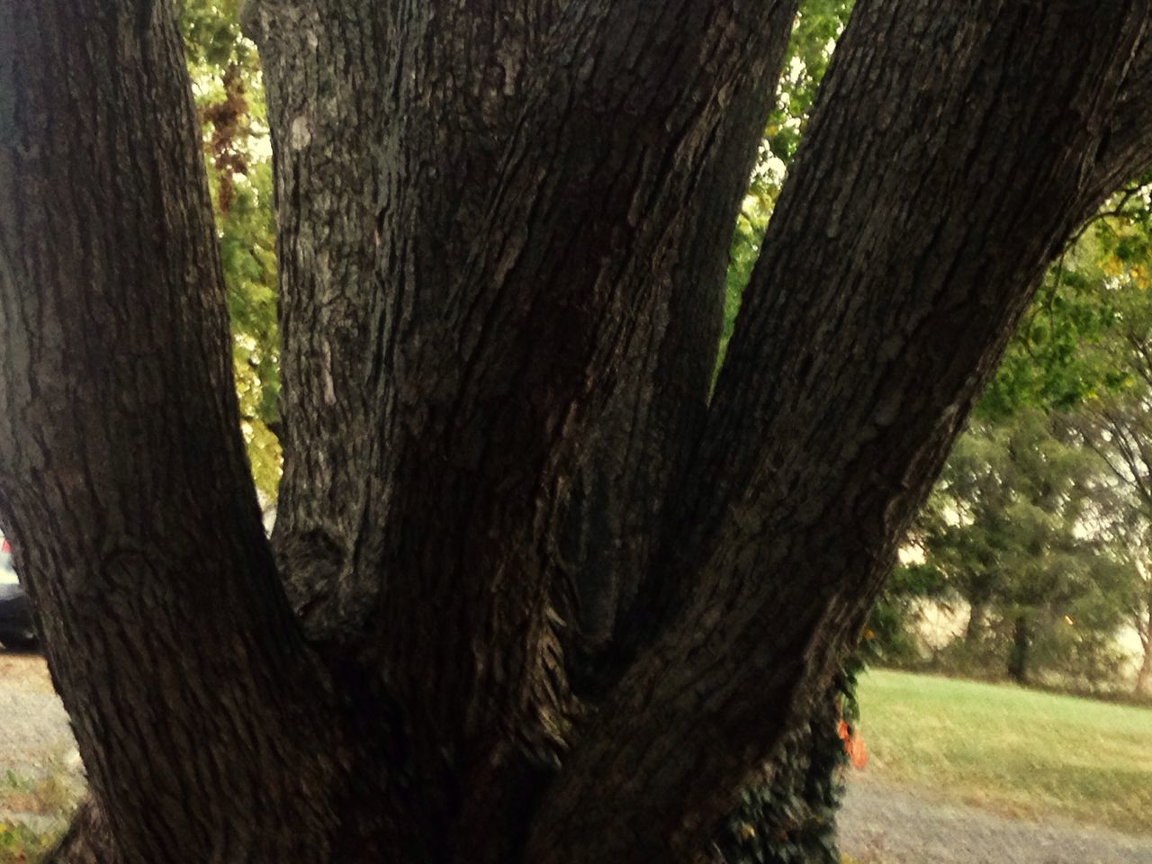 tree trunk, tree, nature, day, no people, outdoors, wood - material, forest, growth, close-up