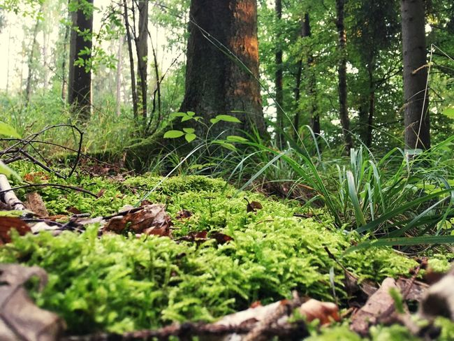 A Bird's Eye View Forest Non-urban Scene Nature Wilderness Green Color Plant