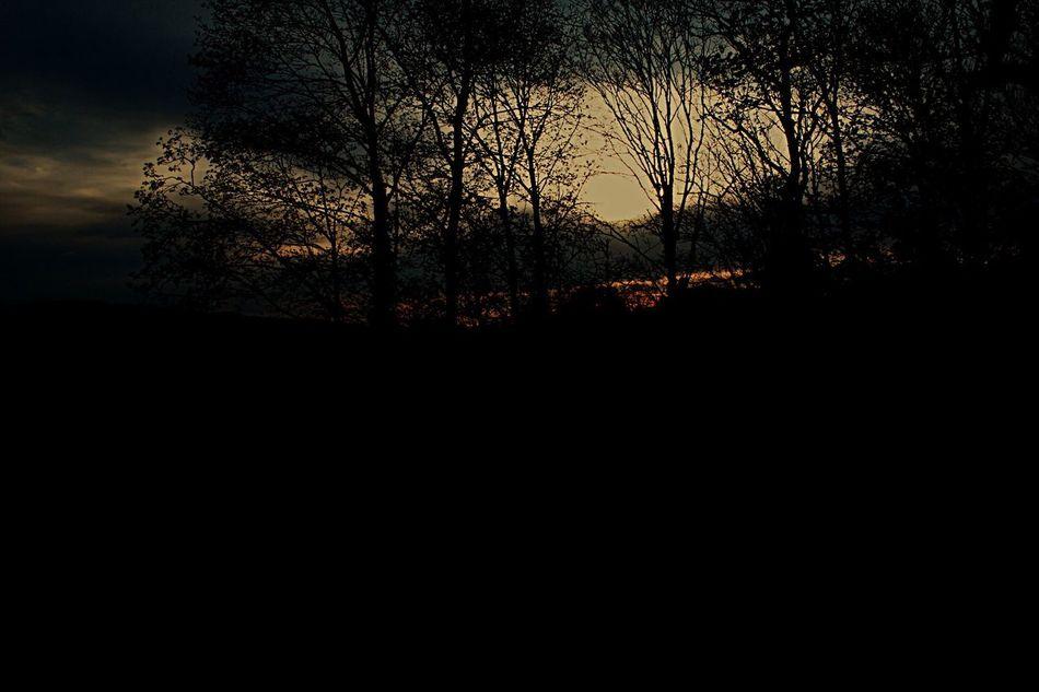 Bern Sunset Wood