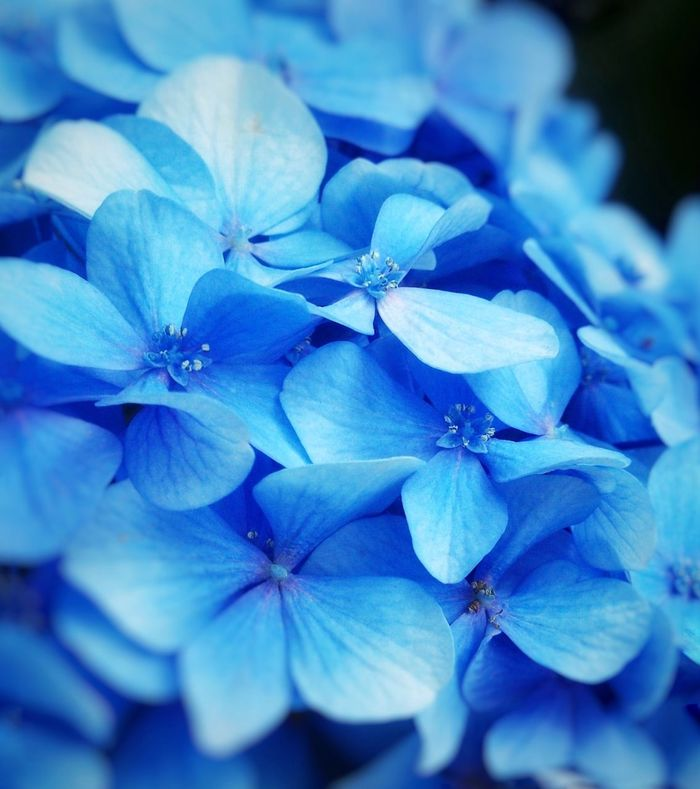 Flower Nature Beauty In Nature No People Close-up Petal Plant Flower Head Day Blue Outdoors