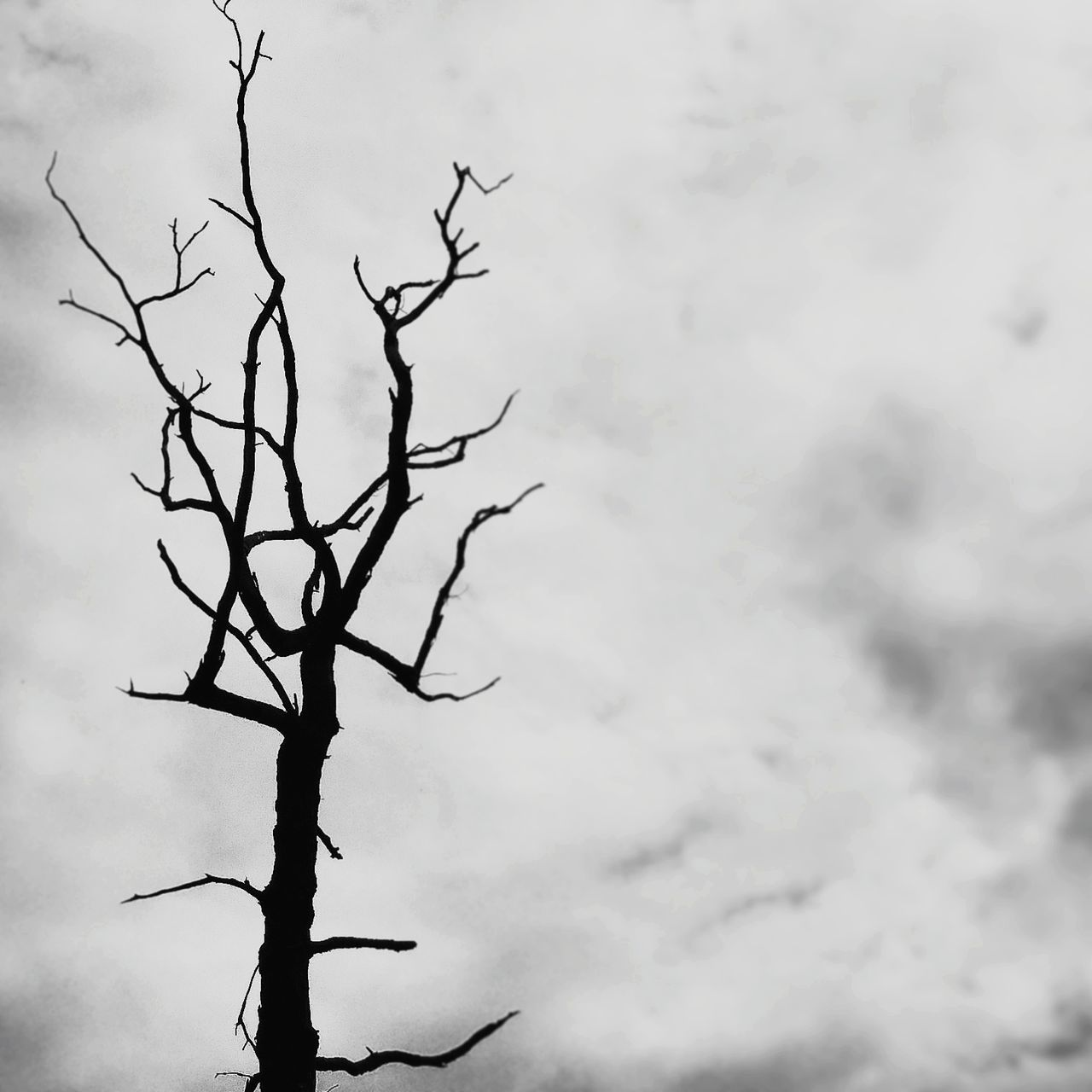low angle view, sky, bare tree, branch, nature, outdoors, tranquility, cloud - sky, day, tree, no people, beauty in nature
