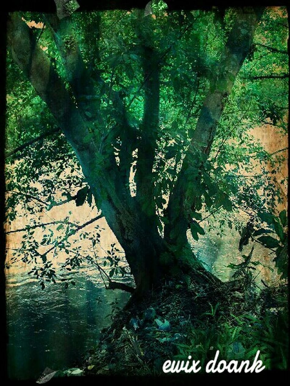 Relaxing Nature_collection ,,tree Nature