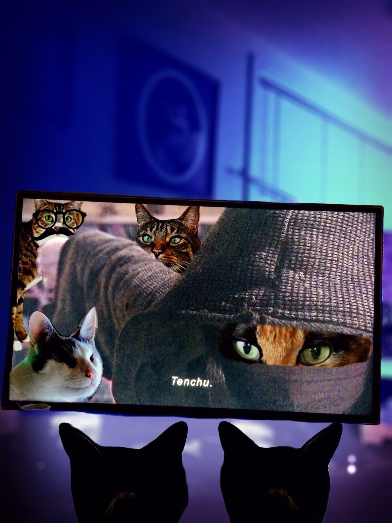"For our friends in Japan. The kitties are glued to the TV whenever Sana appears to dispense justice in heaven's name! Tenchu means ""Heaven's punishment"" or ""heaven's wrath"" Tadaa Community Kitty World Tour Mel&BomBi Cat"