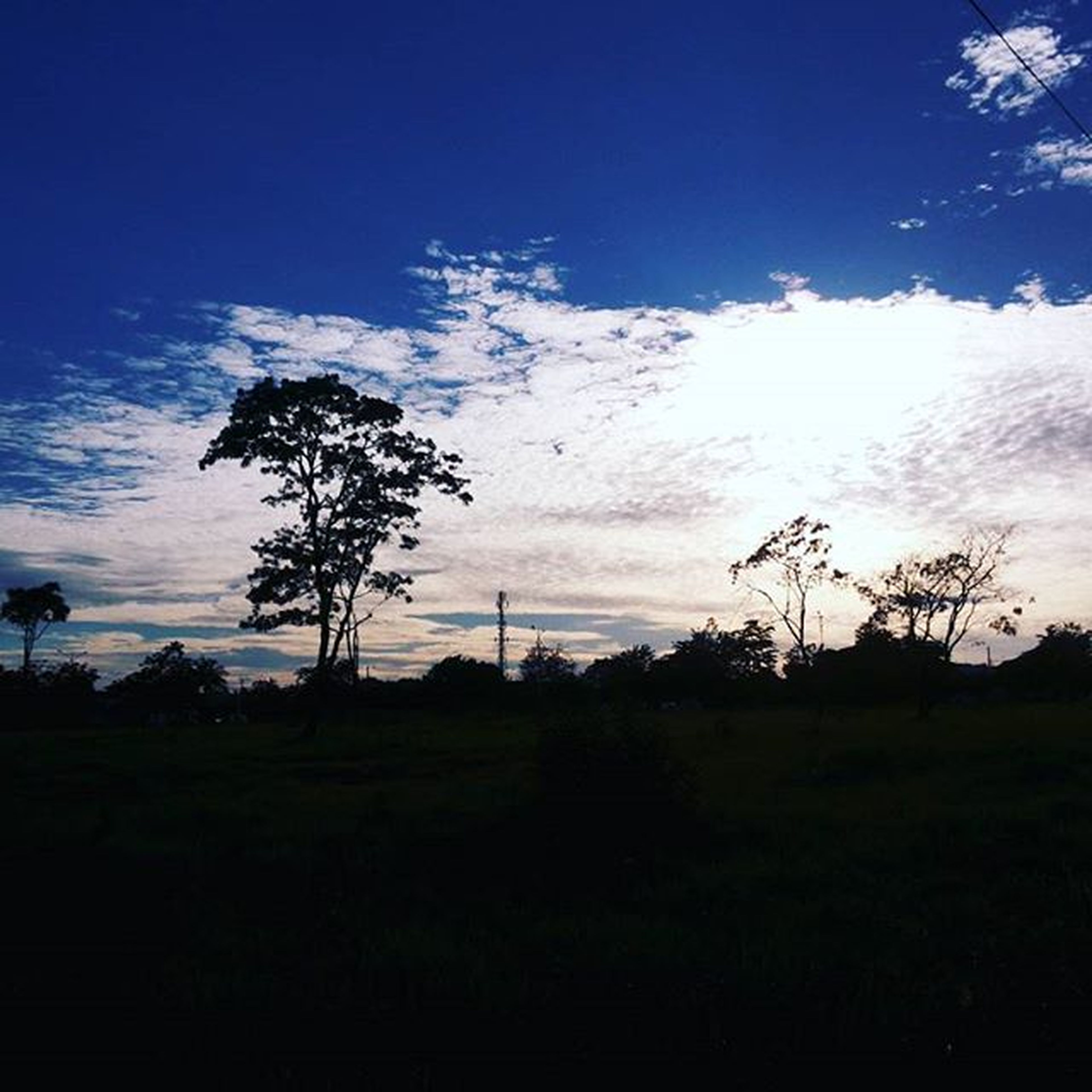 nature, tree, sunset, silhouette, social issues, landscape, sky, agriculture, outdoors, beauty in nature, no people, day