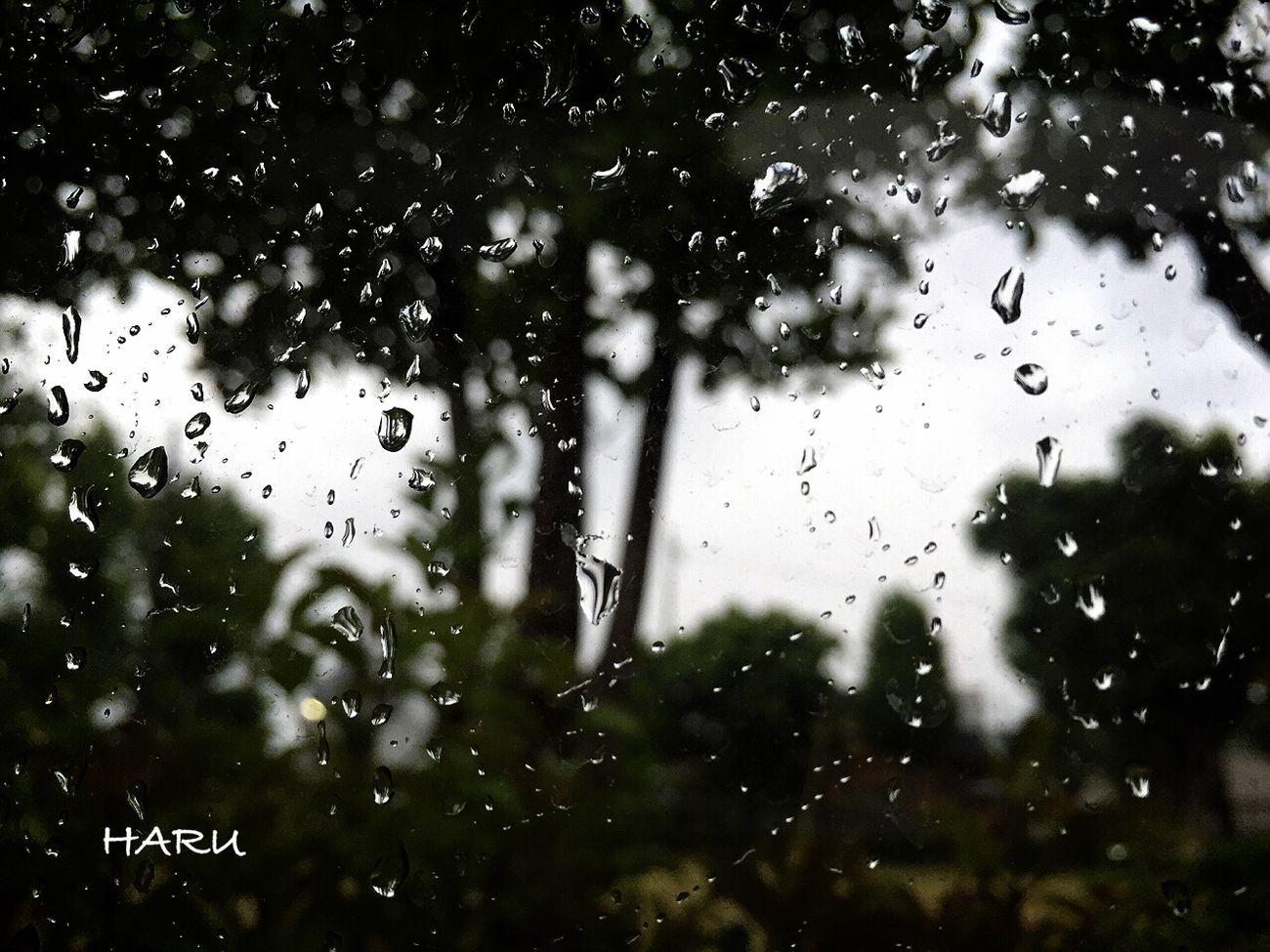 Rain 雨は 嫌い