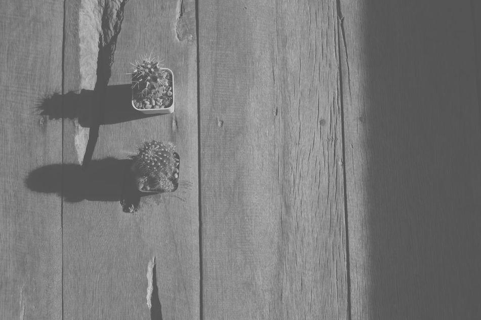 Cactus Cactus Flowers Hardlight Wood