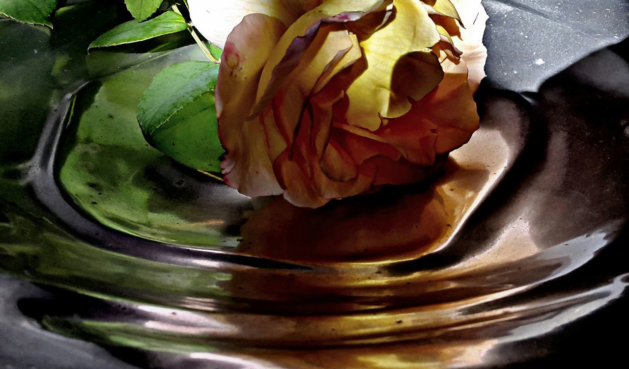 freshness, food and drink, no people, close-up, food, indoors, fragility, healthy eating, beauty in nature, nature, flower, day, flower head