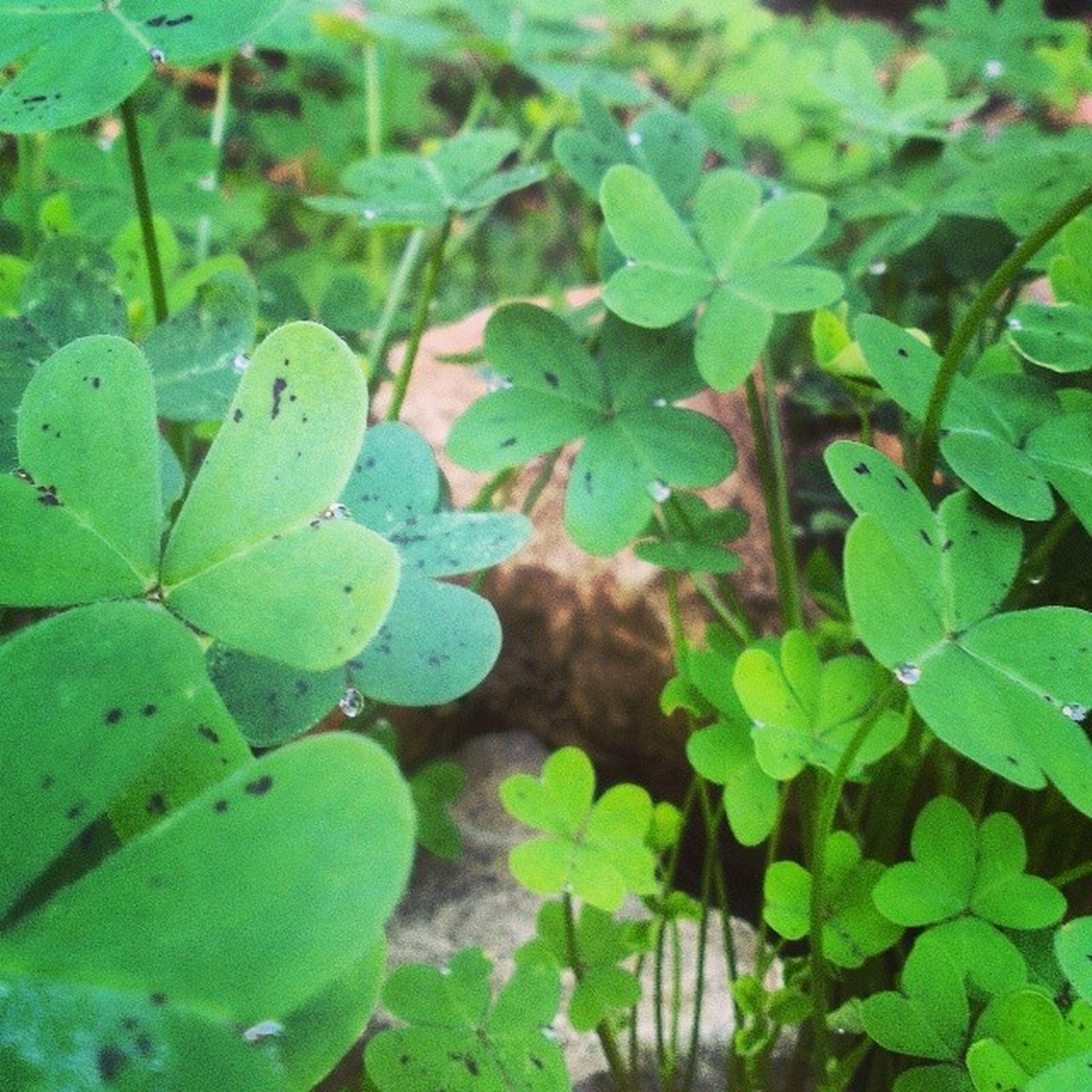 Green Nature Wadichahrour