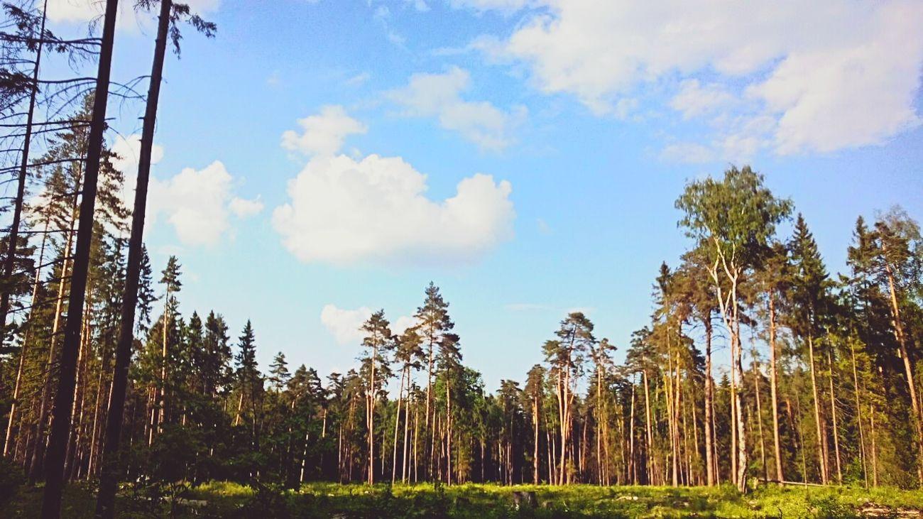 лес и природа облака👍 субботавечер прогулка небо⛅️
