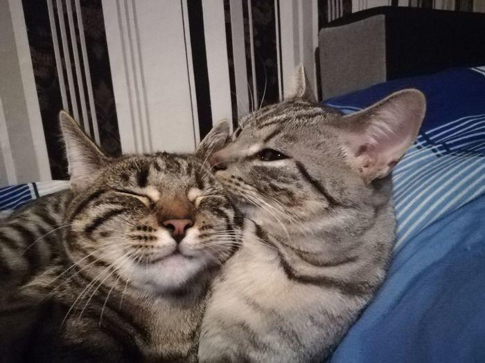 Dolly & Milow One Animal Domestic Cat Pets Animal Themes Feline Mammal Eyes Closed