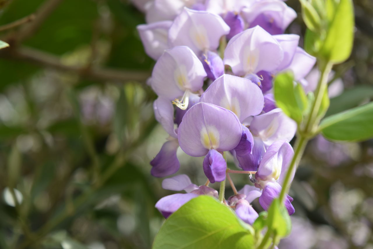 Beauty In Nature Blooming Close-up Day Flower Flower Head Fragility Freshness Growth Growth Nature No People Outdoors Petal Plant Purple Purple Color Purple Flower Purple Flowers Spring Spring Flowers Springtime