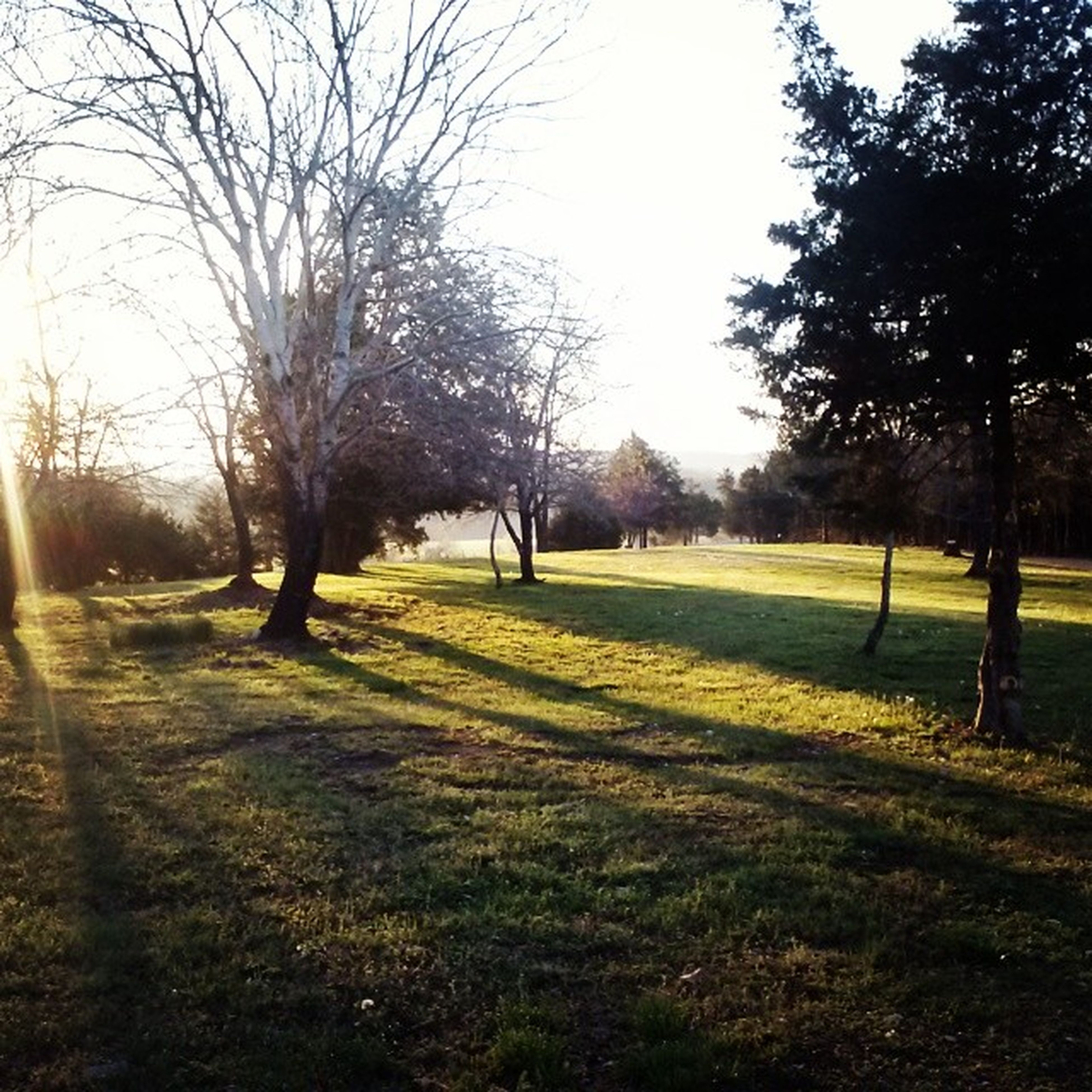 tree, grass, tranquility, bare tree, tranquil scene, tree trunk, field, landscape, nature, the way forward, park - man made space, sunlight, shadow, branch, growth, beauty in nature, scenics, treelined, clear sky, grassy