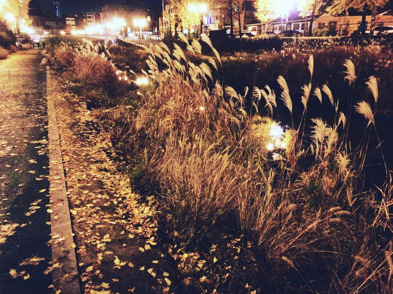 Silvergrass Stream Scenery Night Fall Autumn Yellow