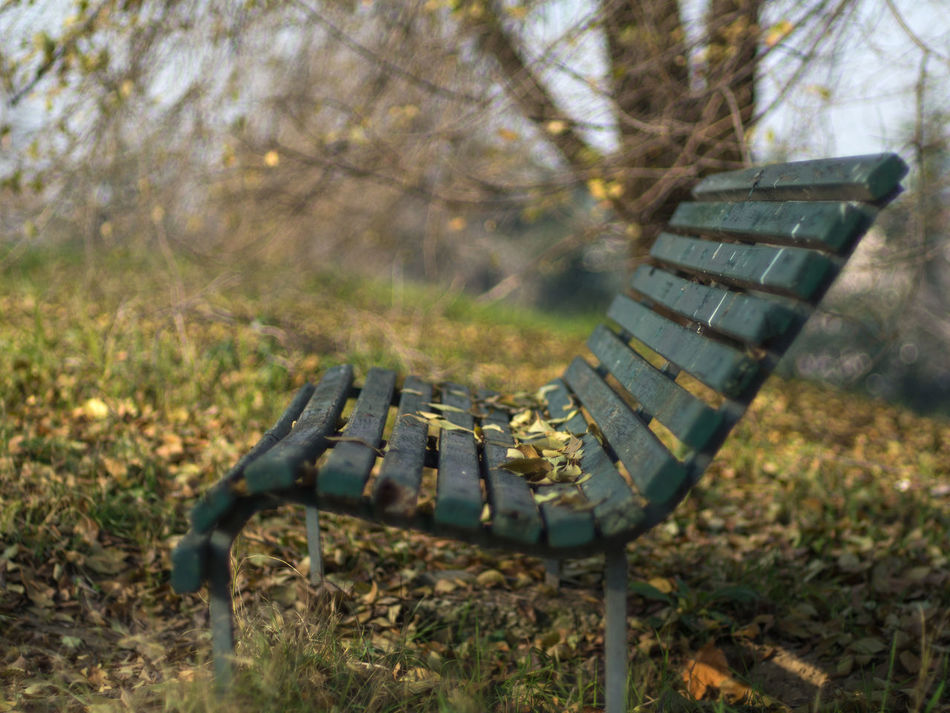 Alone Bench Day Dry Leafs Field Green Green Bench Leafs Meditation Garden Meditation Place Nature Nature No People Outdoors Outumn Park Quiet Relax Relaxing Rest Silence Silence Moment Silence Of Nature Tree Wood Bench