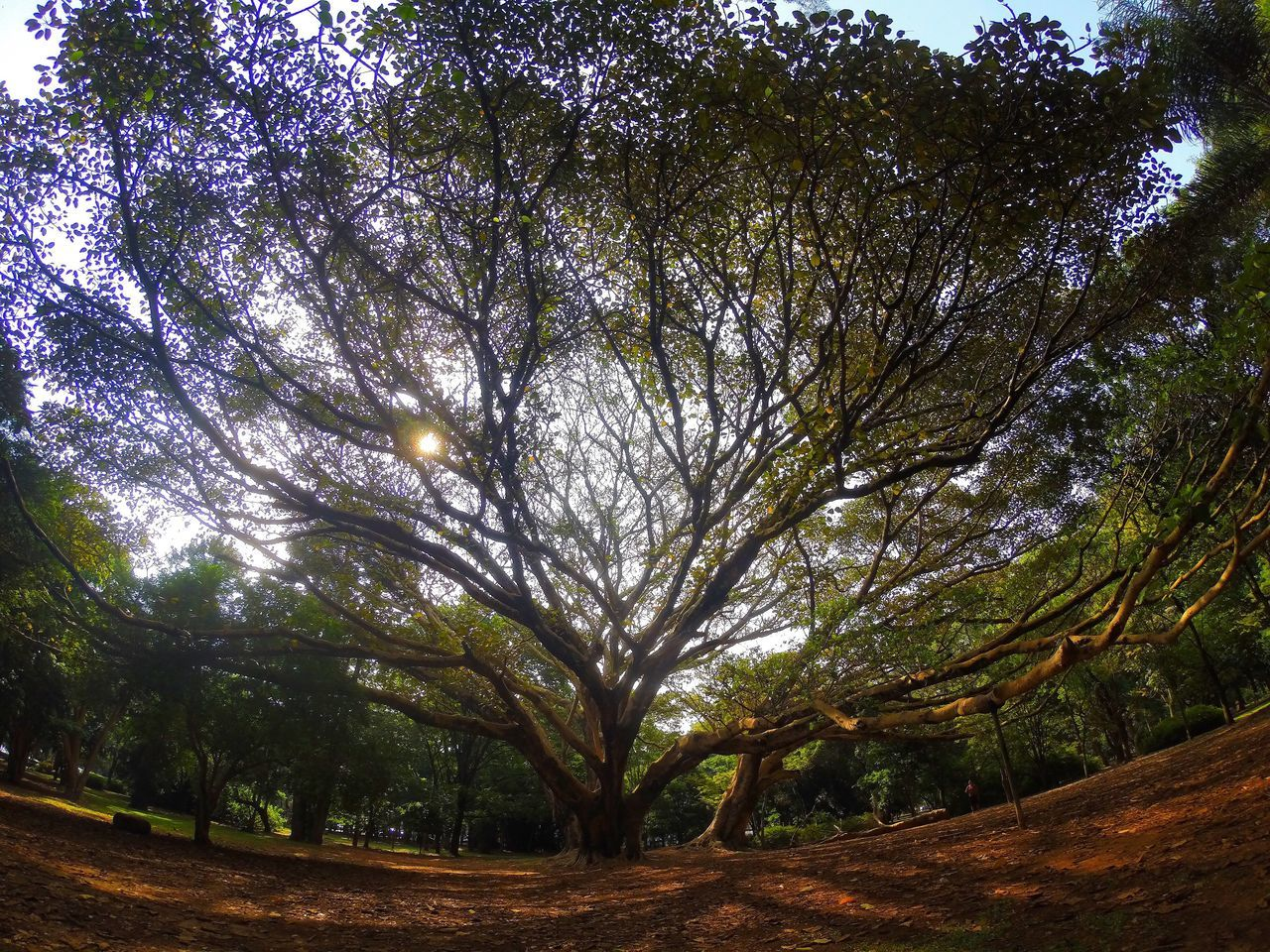 Gopro Goprooftheday GoPro Hero3+ Goprophotography GoPrography Sao Paulo - Brazil São Paulo, Brasil Ibirapuera Ibirapuera Park Nature Nature Photography Beauty In Nature Naturelovers