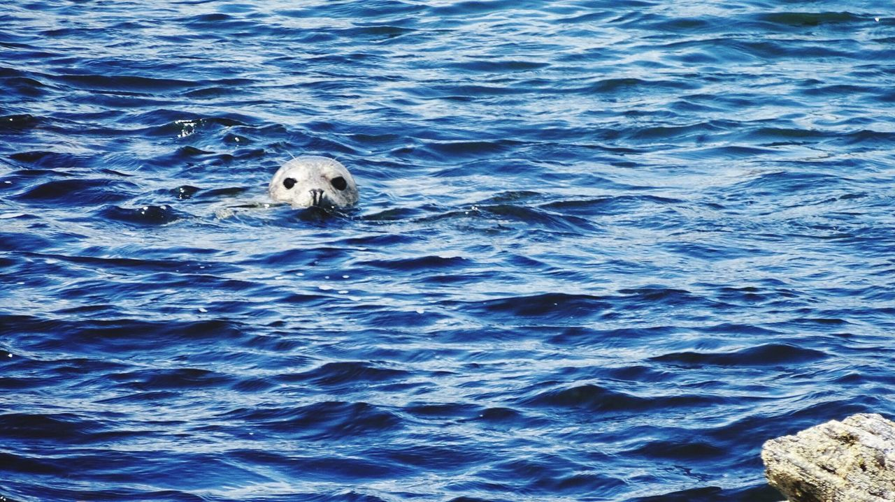 Seal Sealife Seals In The Suns Ireland🍀 Ocean Outdoor Photography TheGreatOutdoors