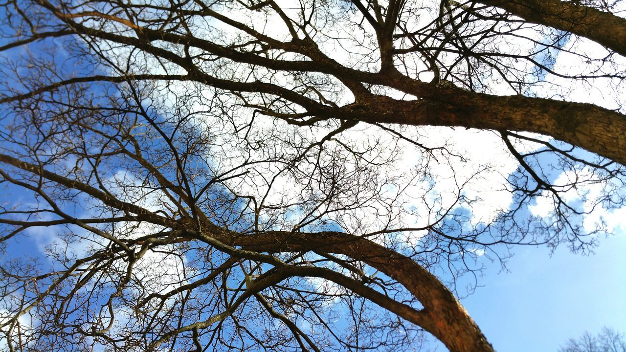 Low Angle View Of Bare Trees Against The Sky