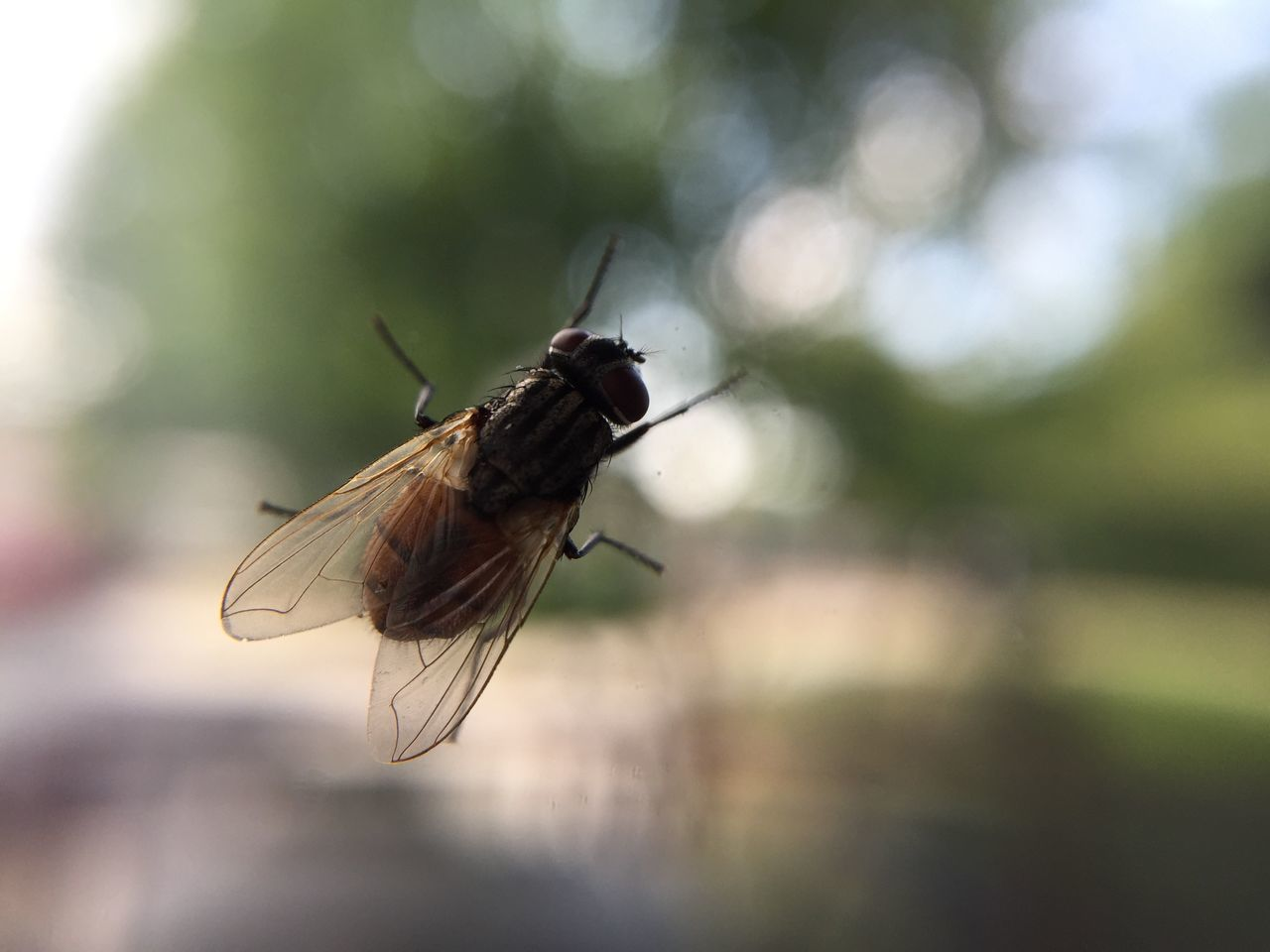 insect, close-up, one animal, animal themes, no people, nature, animals in the wild, outdoors, day