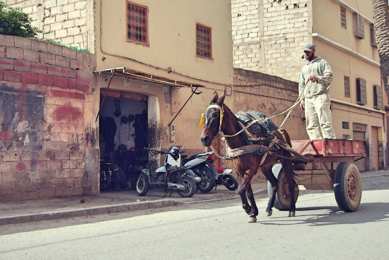 The greatness of a nation can be judged by the way its animals are treated. Architecture Building Exterior Built Structure Carriage City Day Domestic Animals Horse Horse Cart Horsedrawn Mammal Men Morocco One Animal One Man Only One Person Outdoors Riding Street Transportation Working Animal