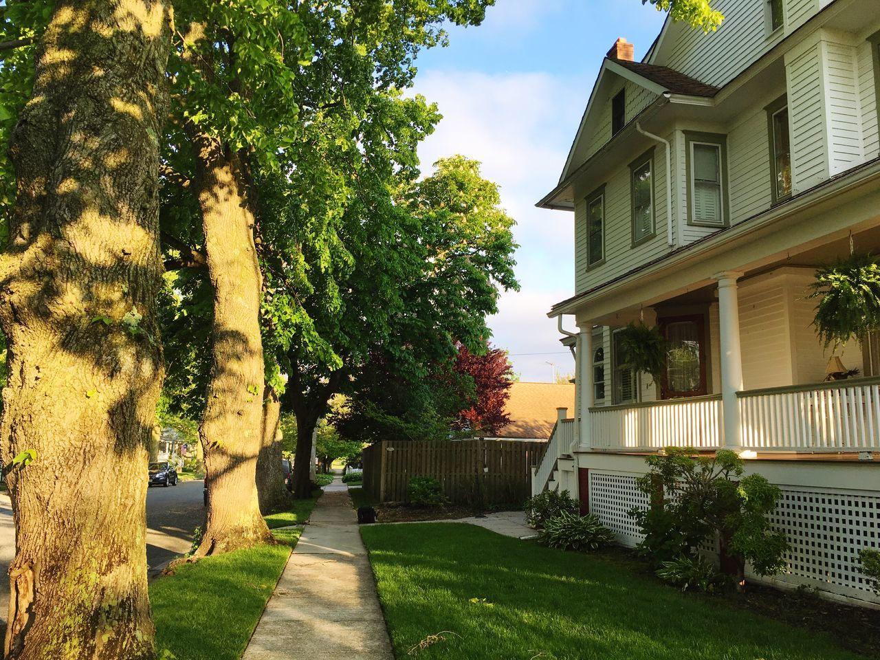 tree, architecture, building exterior, house, built structure, grass, outdoors, growth, no people, plant, nature, day, sky