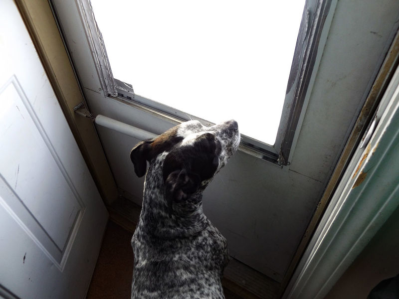 My Dog Photographic Memory Spots Black And White Playing With Light Snow White Light Dogs Dog Looking Out The Window Hope Waiting Patience Q Qualm Things I Like The Portraitist - 2016 EyeEm Awards Fine Art Photography TakeoverContrast Uniqueness Welcome To Black Art Is Everywhere BYOPaper! Pet Portraits