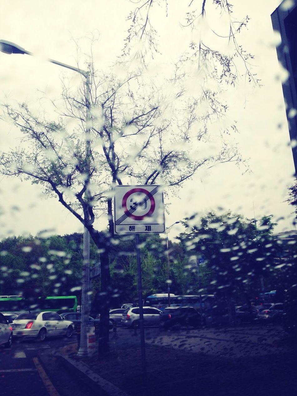 비오는 날, 차안에서 빗소리 듣기