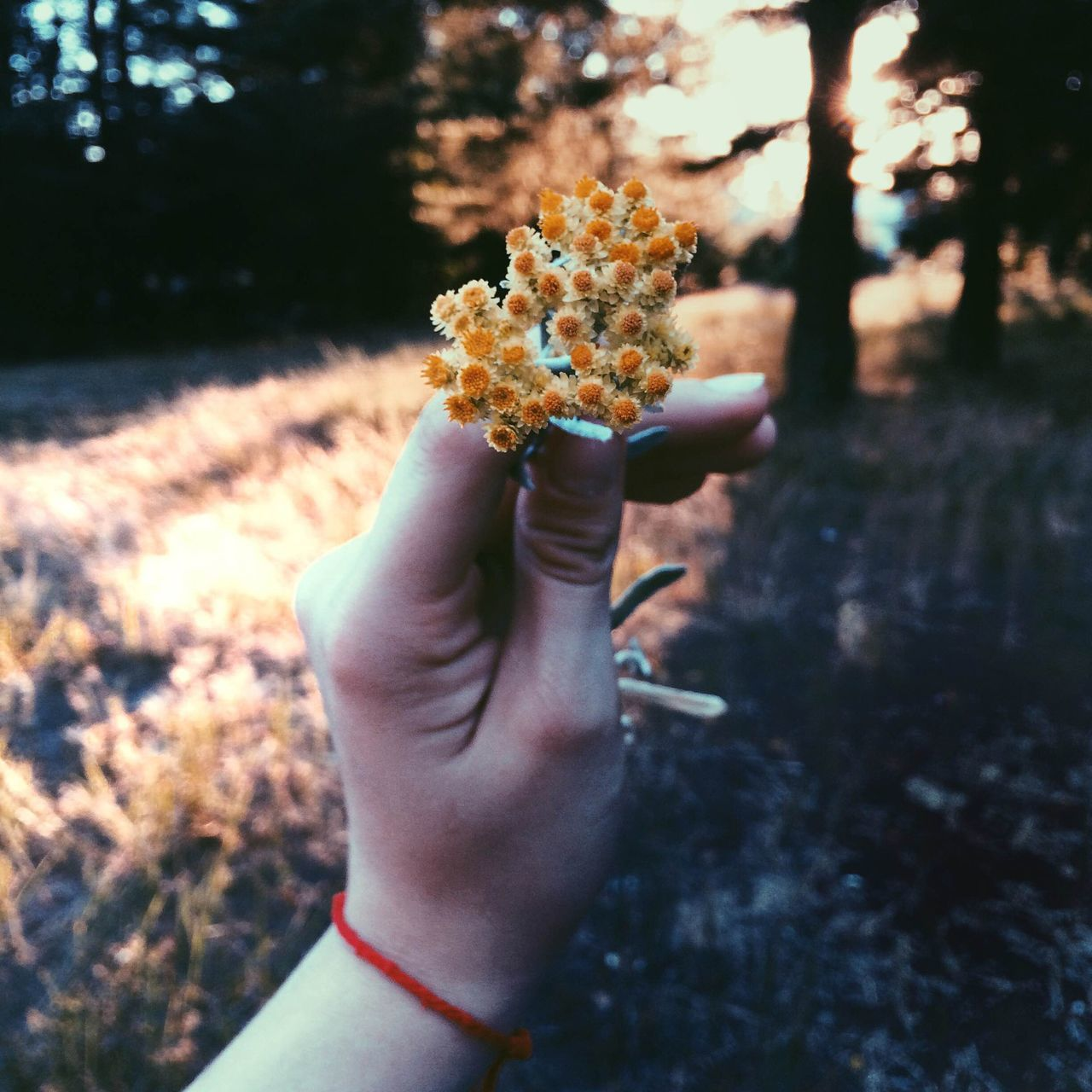 human hand, flower, holding, one person, outdoors, human body part, real people, nature, tree, close-up, beauty in nature, grass, day, people