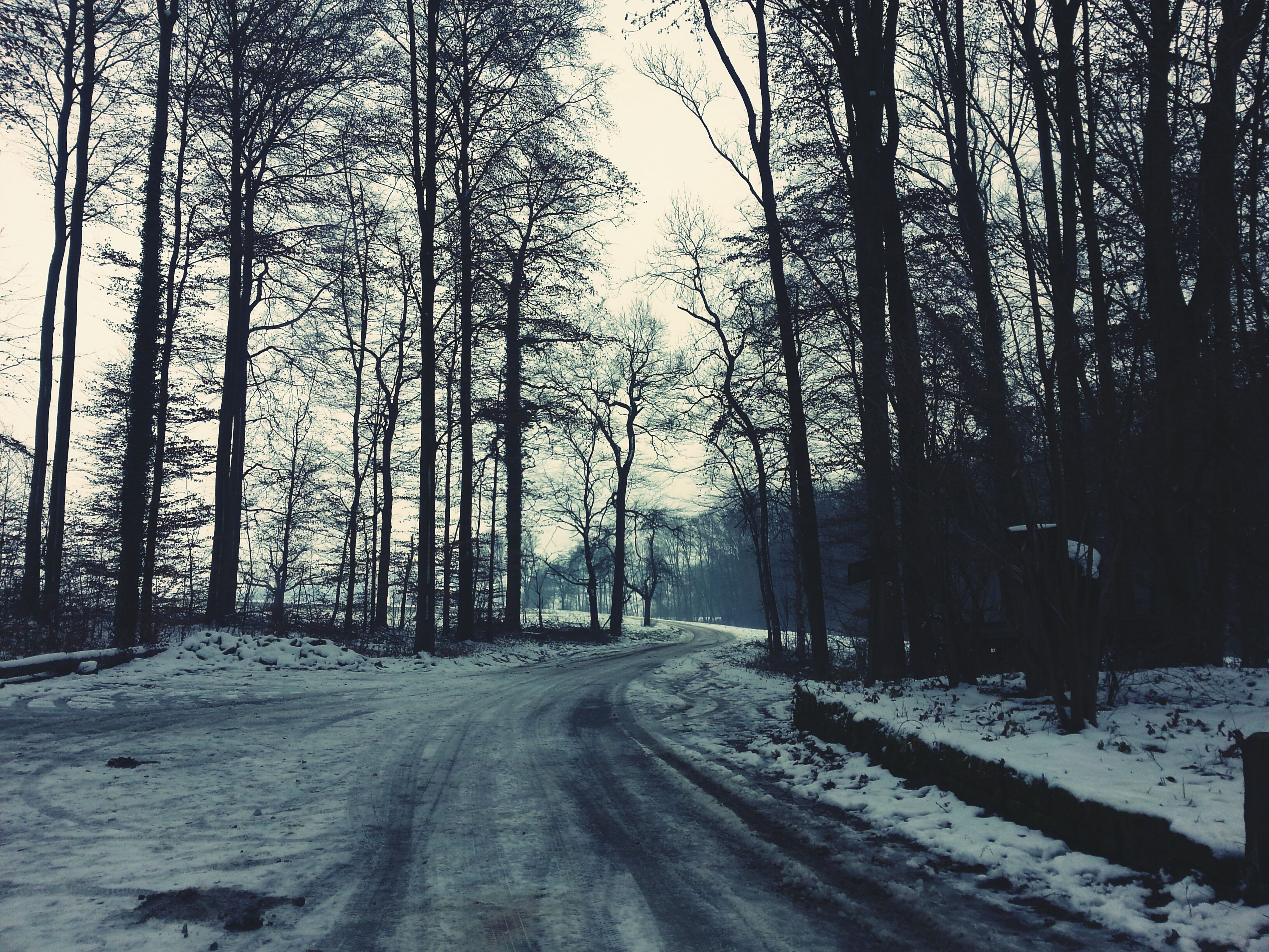 snow, winter, cold temperature, tree, season, bare tree, tranquility, weather, tree trunk, covering, the way forward, tranquil scene, nature, road, beauty in nature, landscape, branch, scenics, frozen, white color