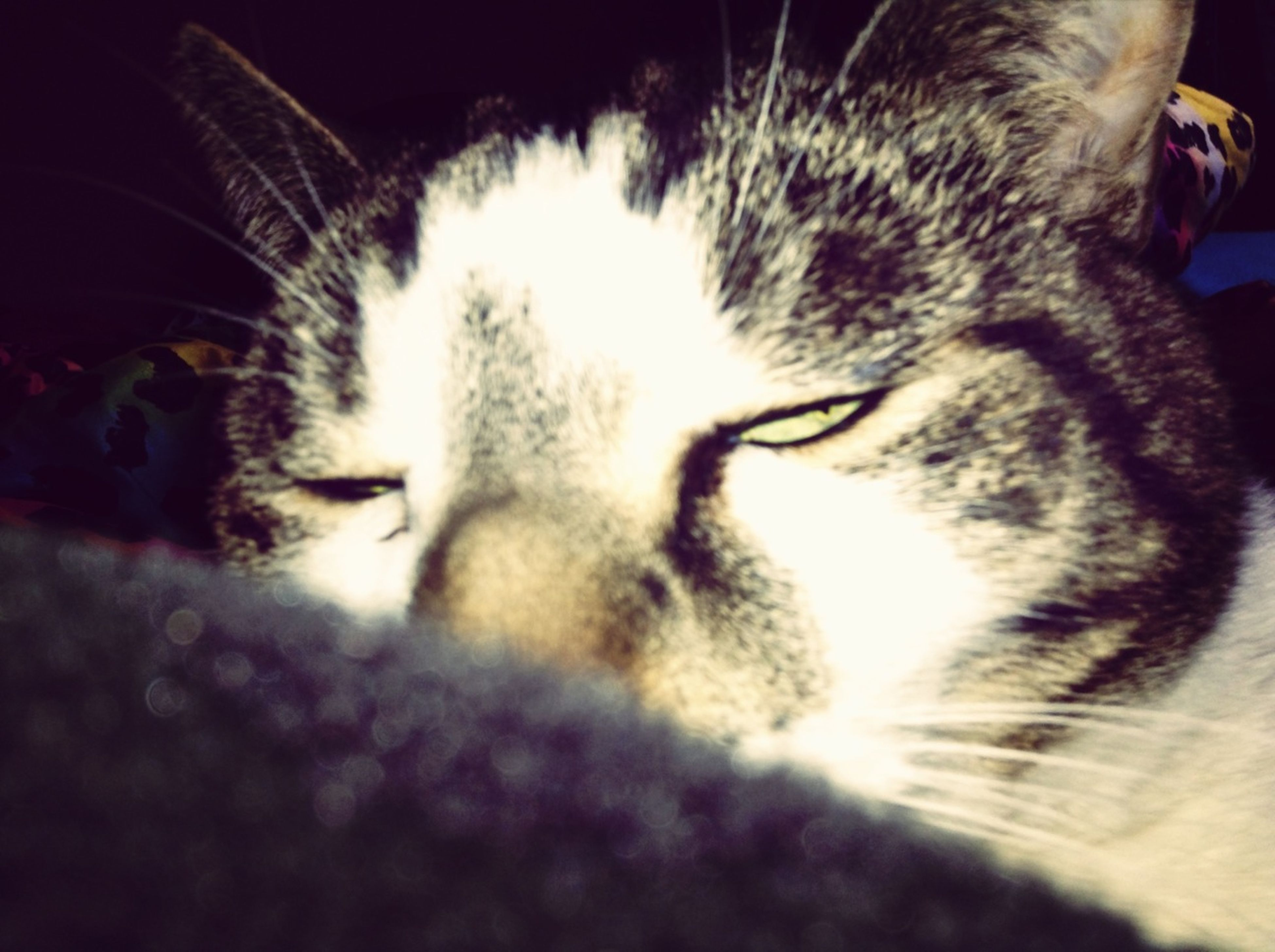 mammal, domestic animals, pets, animal themes, one animal, domestic cat, cat, feline, indoors, close-up, whisker, animal head, sleeping, eyes closed, part of, relaxation, animal body part, lying down, night, no people